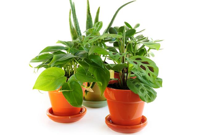 как перевозятся живые растения в контейнерах